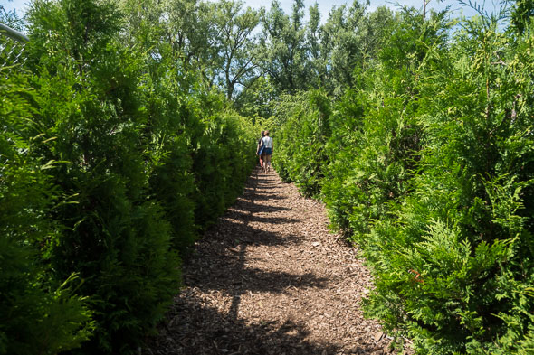 """Photo credit: Jenna King. """"This is what the Maze Looks like on Toronto Island.""""  BlogTO"""