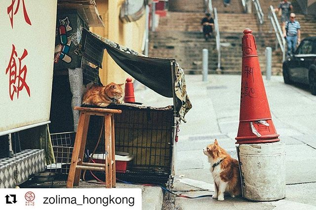 #Repost @zolima_hongkong (@get_repost) ・・・ Wonder what they are talking about... 🤔| 📷: @glaycheong_visual_diary