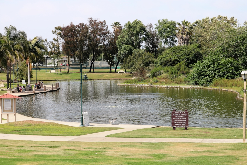Polliwog Park (Manhattan Beach, California), home to a large population of introduced red-eared sliders ( Trachemys   scripta     elegans ). Photograph by George L. Heinrich.