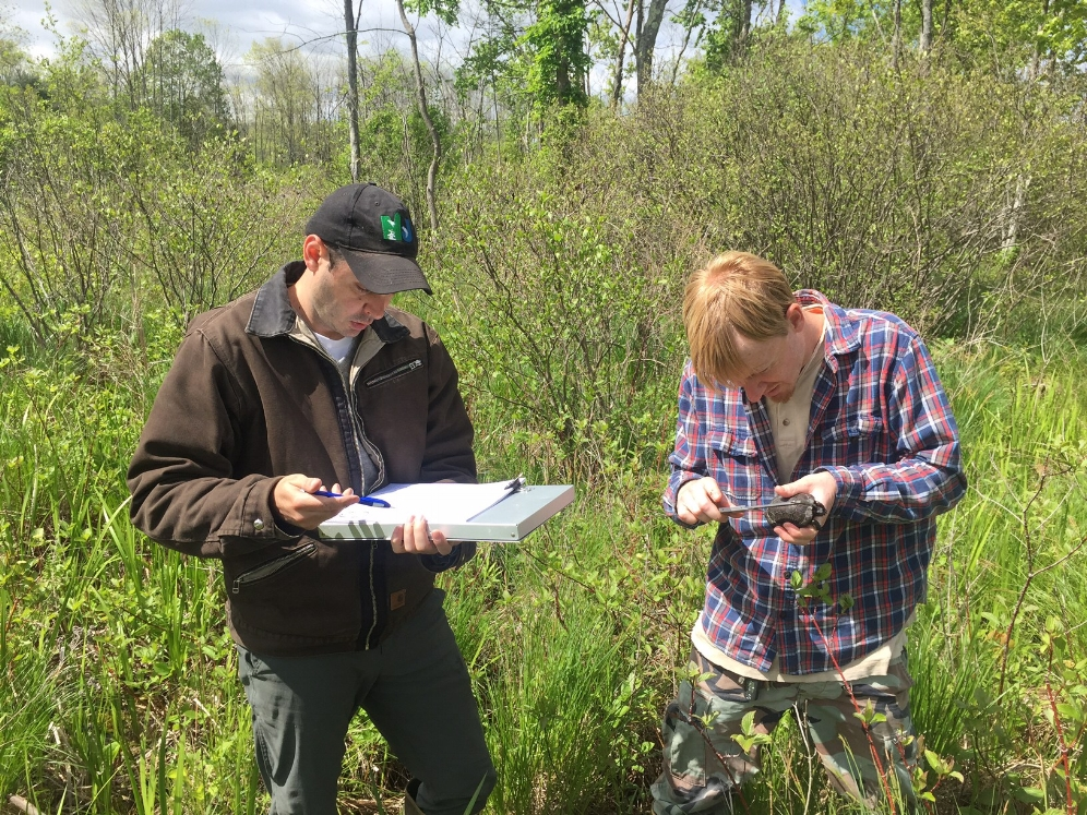 Brian Zarate and Kevin Pollack record data on a bog turtle ( Glyptemys muhlenbergii ). Photograph by Timothy J. Walsh.