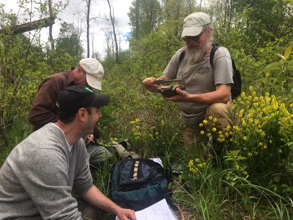 George L. Heinrich, Brian Zarate, and Jim Angley recording data on a wood turtle ( Glyptemys   insculpta ). Photograph by Timothy J. Walsh.