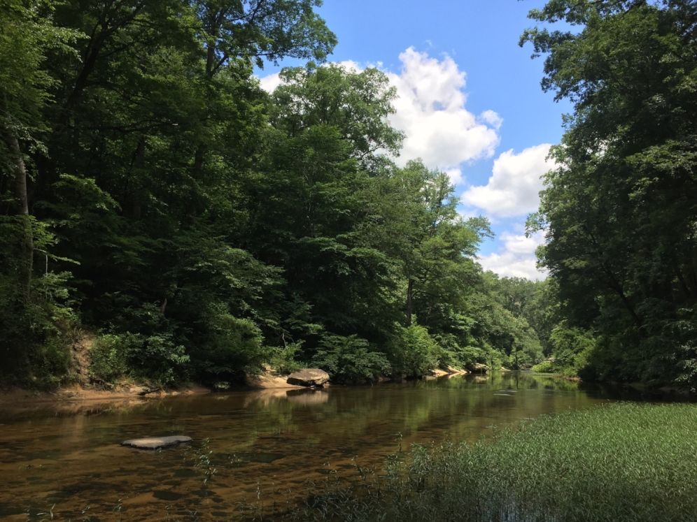 A stream in the Bankhead National Forest (Winston County, Alabama) where we searched for flattened musk turtles ( Sternotherus   depressus )and Alabama map turtles ( Graptemys   pulchra ). Photograph by Timothy J. Walsh.