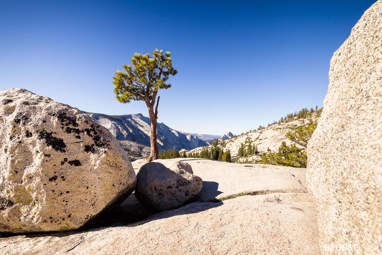 yosemite-national-park-california-2.jpg