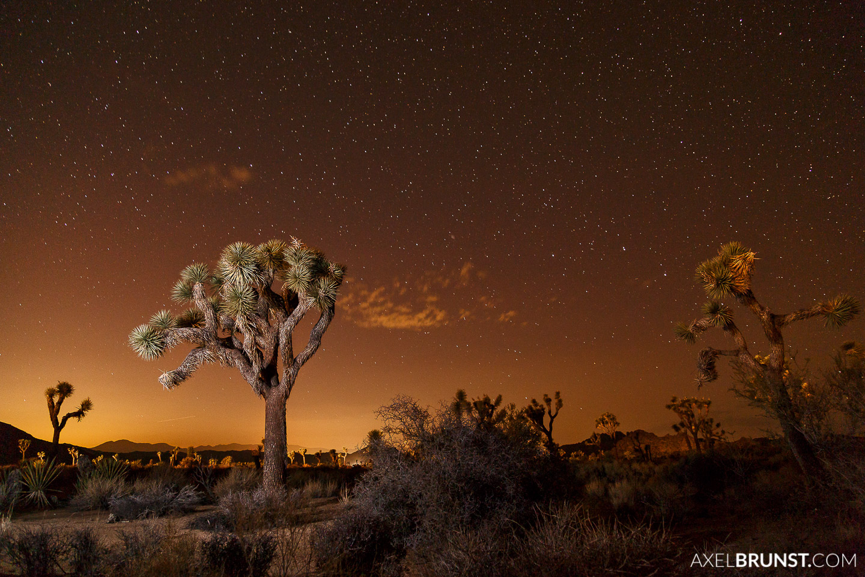 Joshua-Tree-National-park-CA-5.jpg