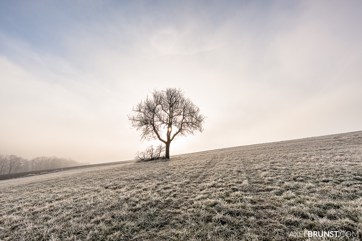 Frosty-winter-morning-Ditzingen-Germany-5.jpg