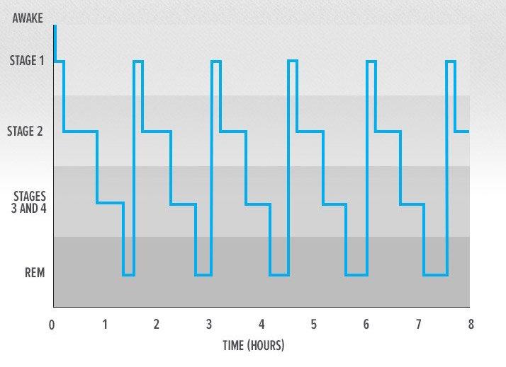 stages-of-sleep.jpg