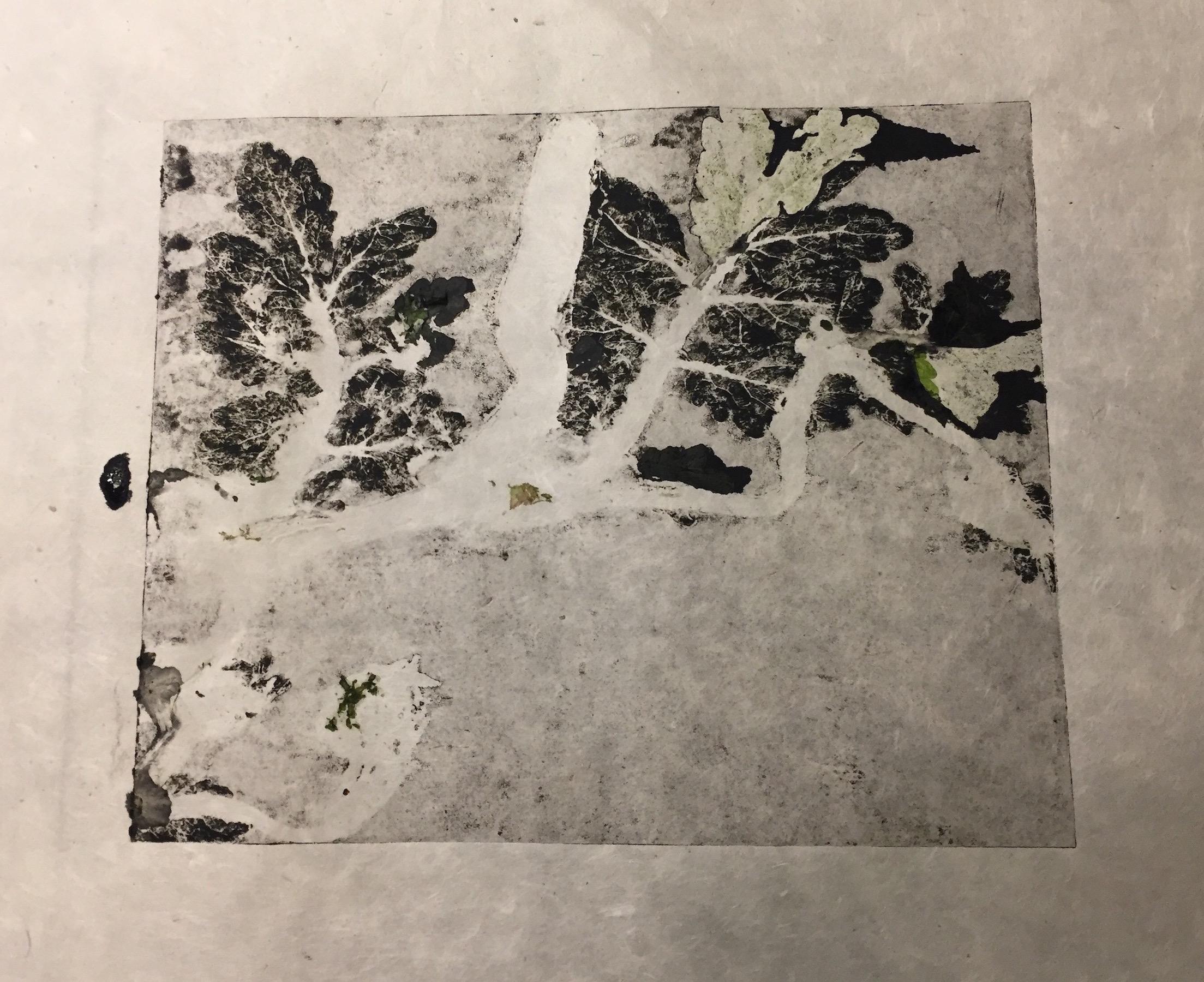 Cruz, Ada - celandine monoprint negative.jpeg