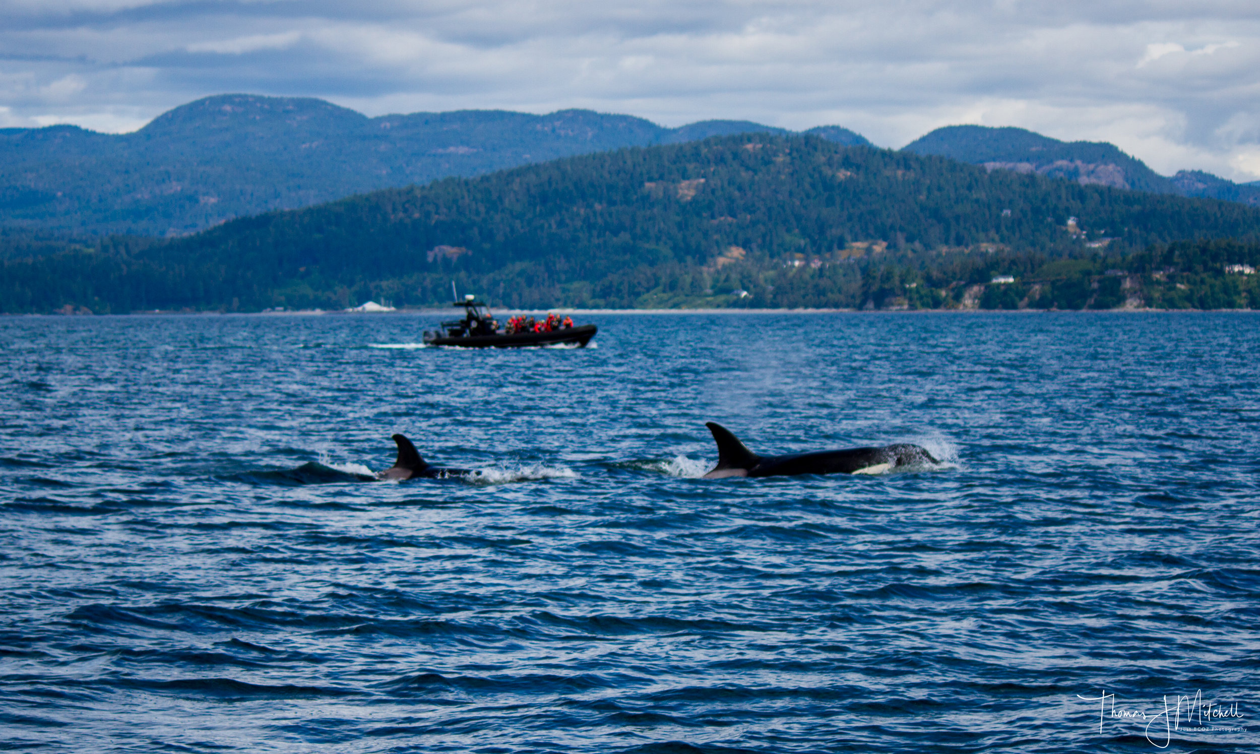 The T100s cruising past Sooke, BC - BC TIKA in the background with Capt. Gordon at her hel