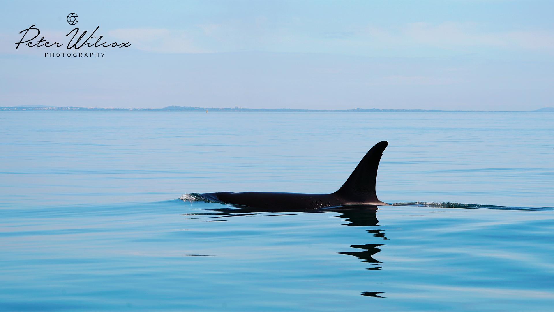 Orca 6.5.18.2.jpg