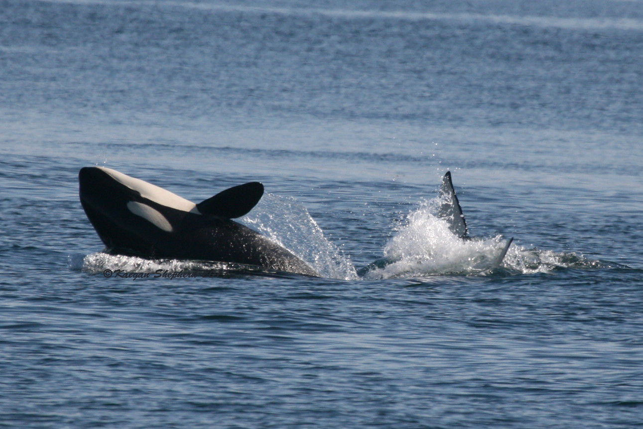 Calf back dive.jpg