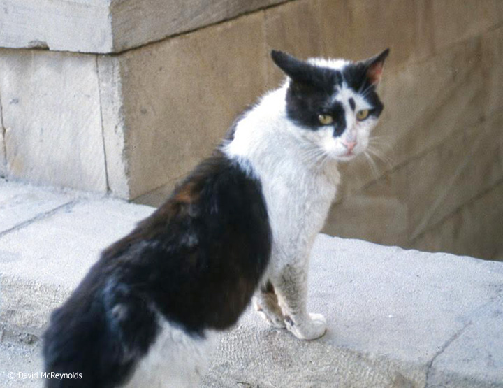 Soviet cat.