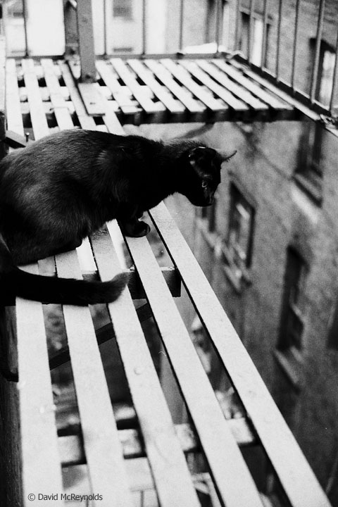 Mephie 2, David's first NYC cat out on his fire escape, 1957.