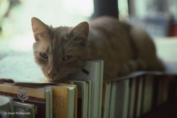 Literary cat, May 1978.