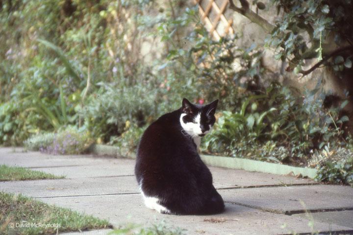 European cat, 1984.