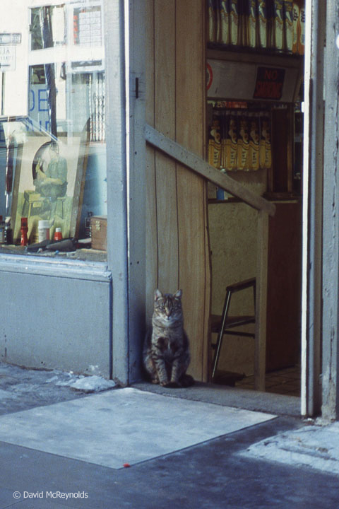 Store cat, NYC, November 1990.