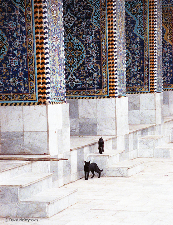 Iraqi cats at a mosque in Babylon, October 1990.