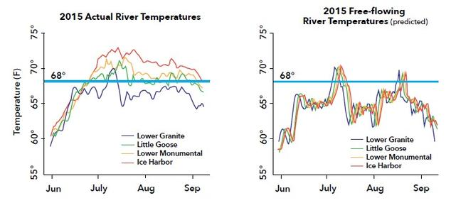 Figure 1: Comparison of 2105 summer water temperatures between the actual, dammed Lower Snake River (left) and a modeled, free-flowing Lower Snake River (right). The blue horizontal lines show 68°F—the water temperature that seriously impairs salmon migration. Source: CRK White Paper