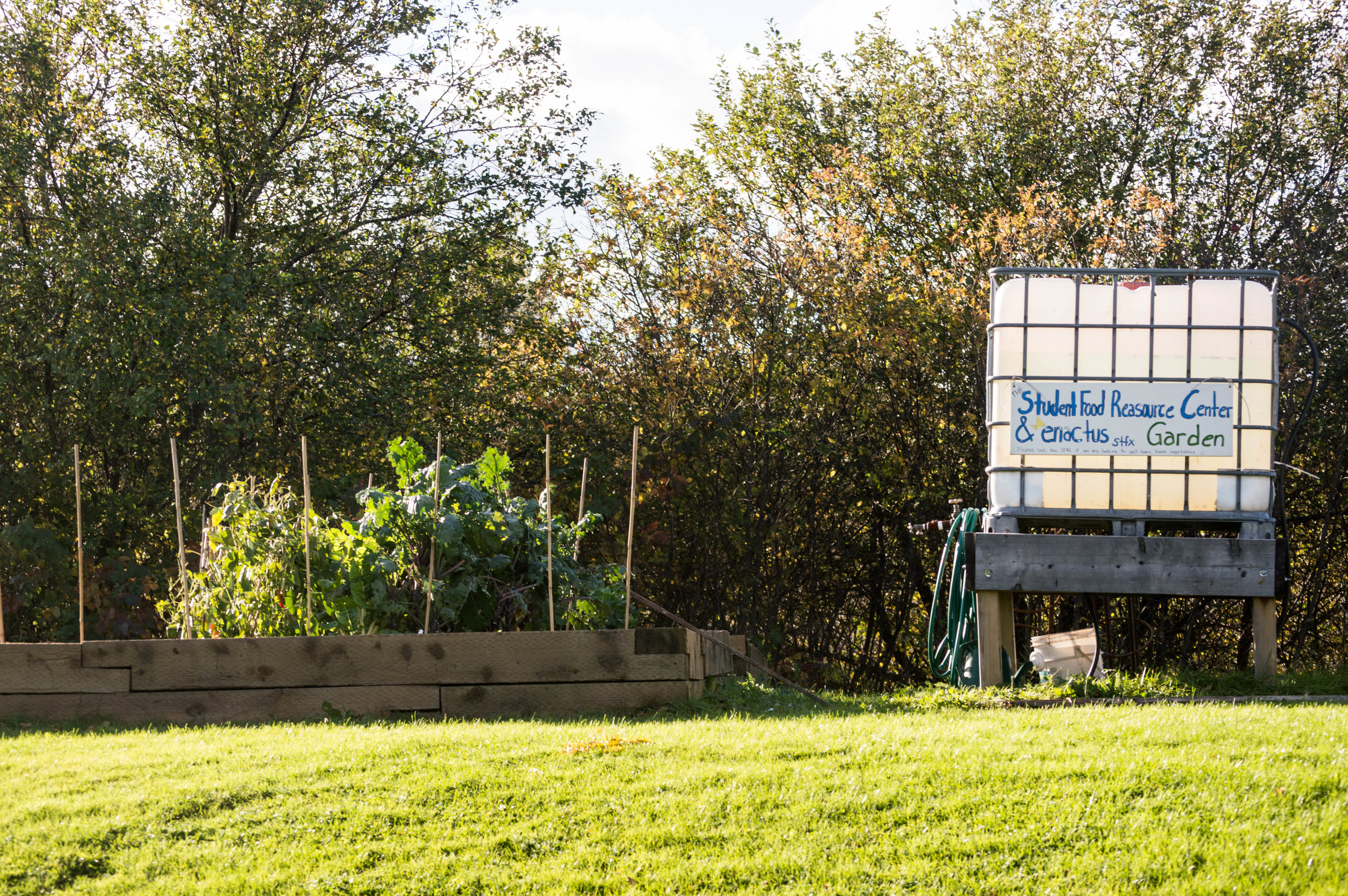 the student run garden has grown approximately 300 pounds of food so far this year. photo: jessica fullerton.