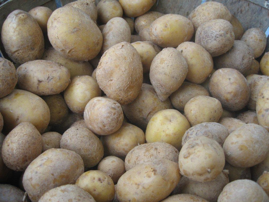 farmers_market_388-potatoes.jpg