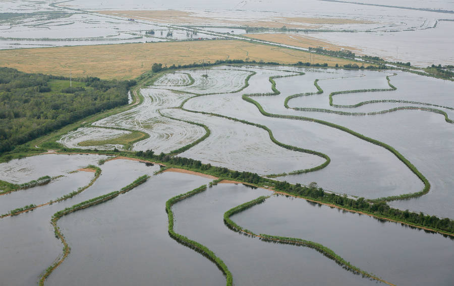 Texas experienced destruction of agricultural enterprises after Hurricane Harvey. Credit: Staff Sgt. Daniel J. Martinez/U.S. Air National Guard