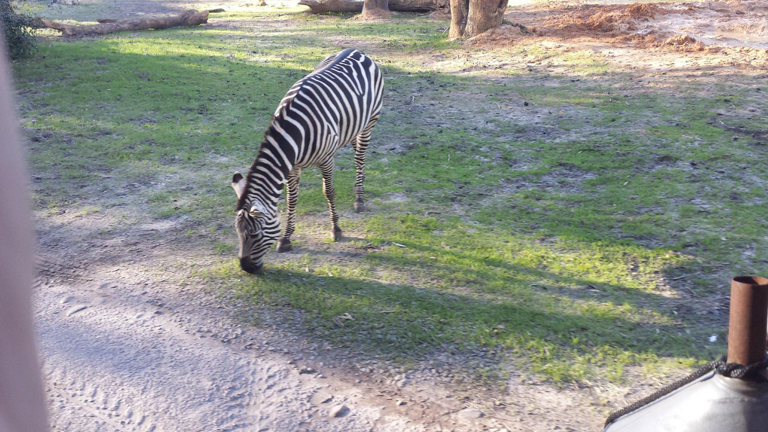 More safari.