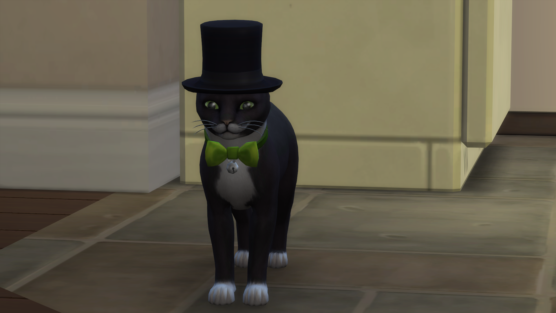Fancy cat.