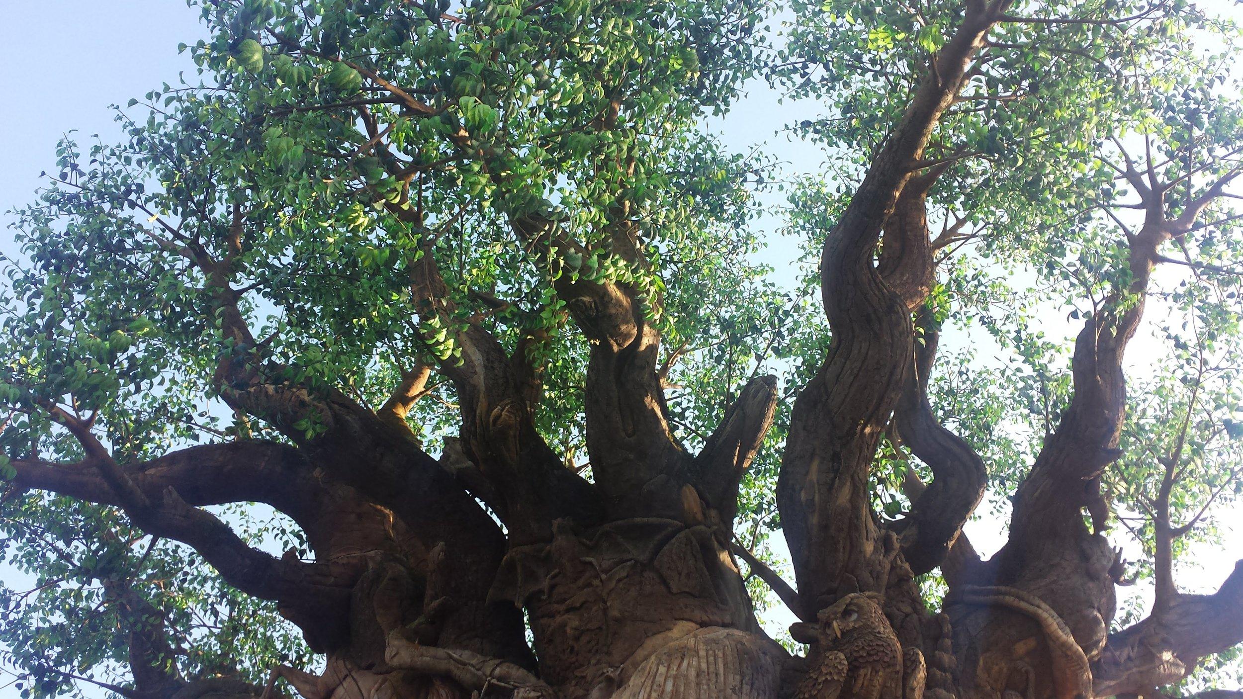 the tree of life at animal kingdom in walt disney world.