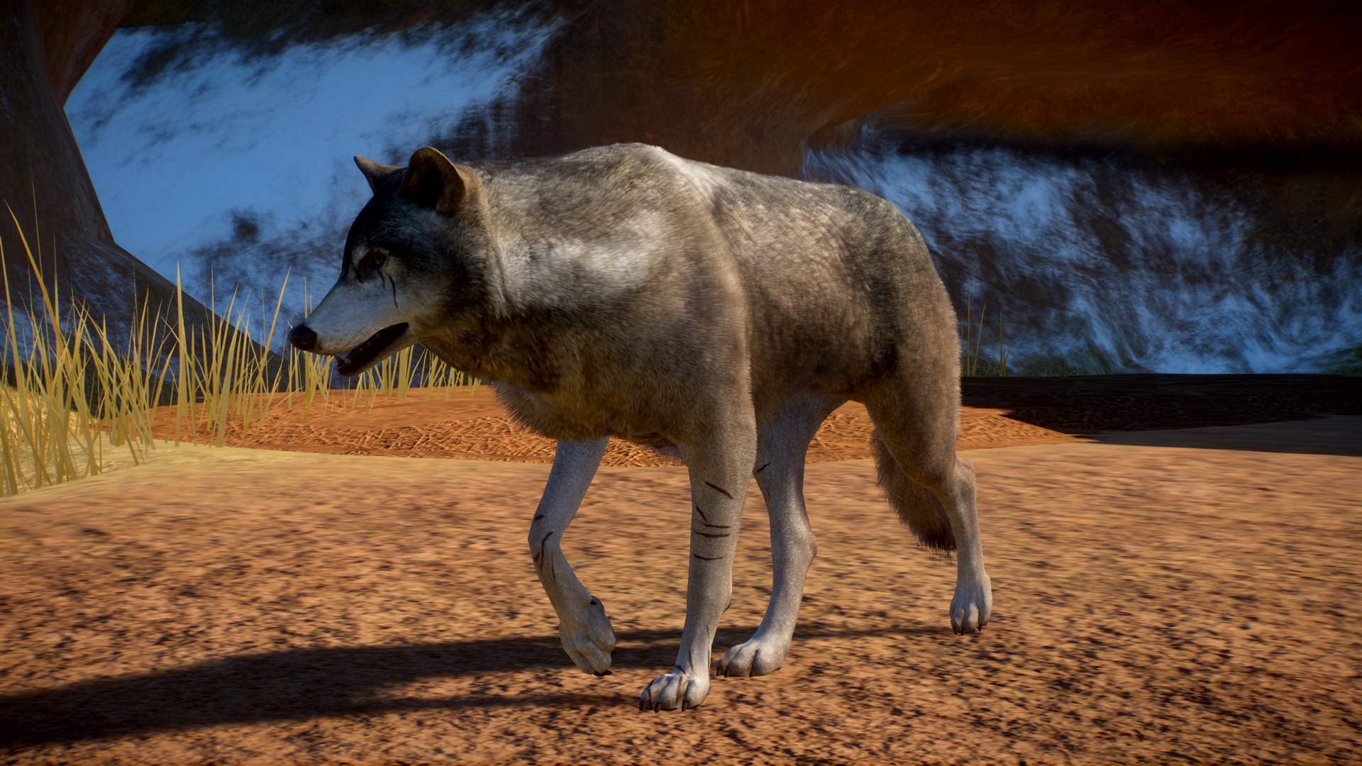 A screenshot of a wolf from Planet Zoo.