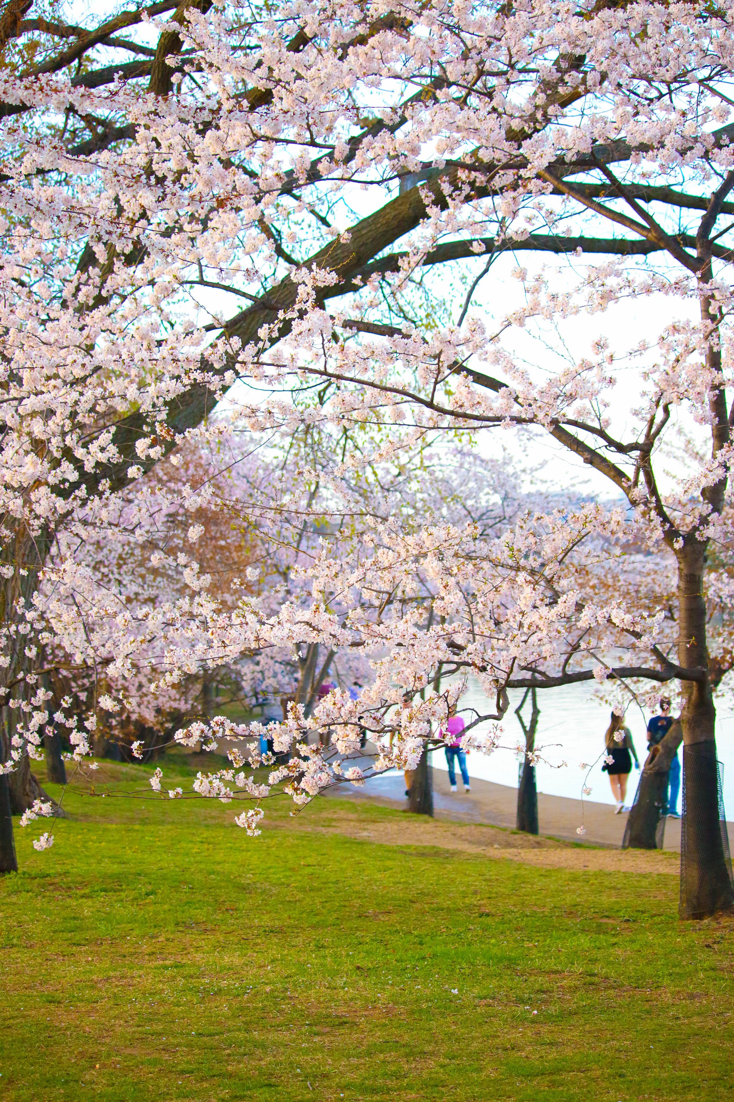 Washington, DC,  photo by me