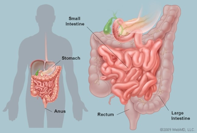 intestines.jpg