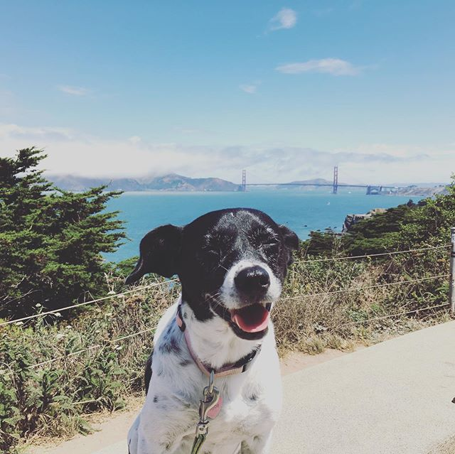 Maebe does NorCal ☀️🐶🧳