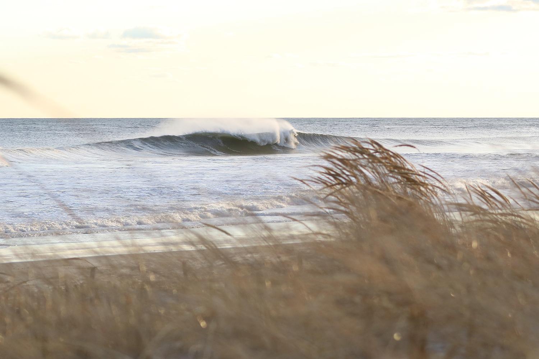 3-4-18 Lido Wave Grass 3.jpg