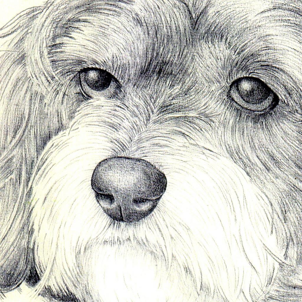 Drawing, Dog Portrait