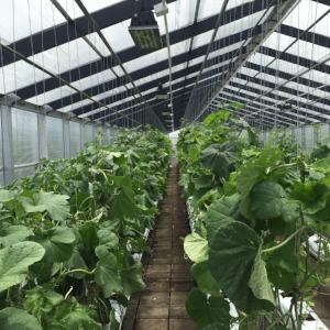 2016 May_ZH greenhouse_3.jpeg