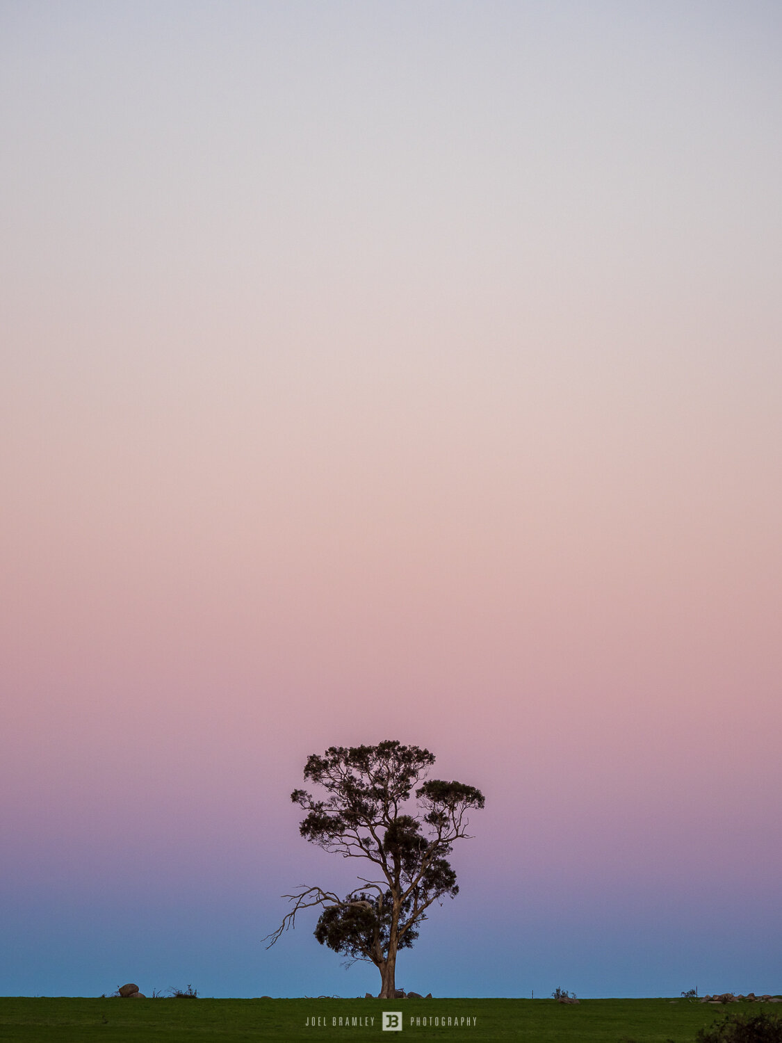 full-moonrise-tree-s-2.jpg