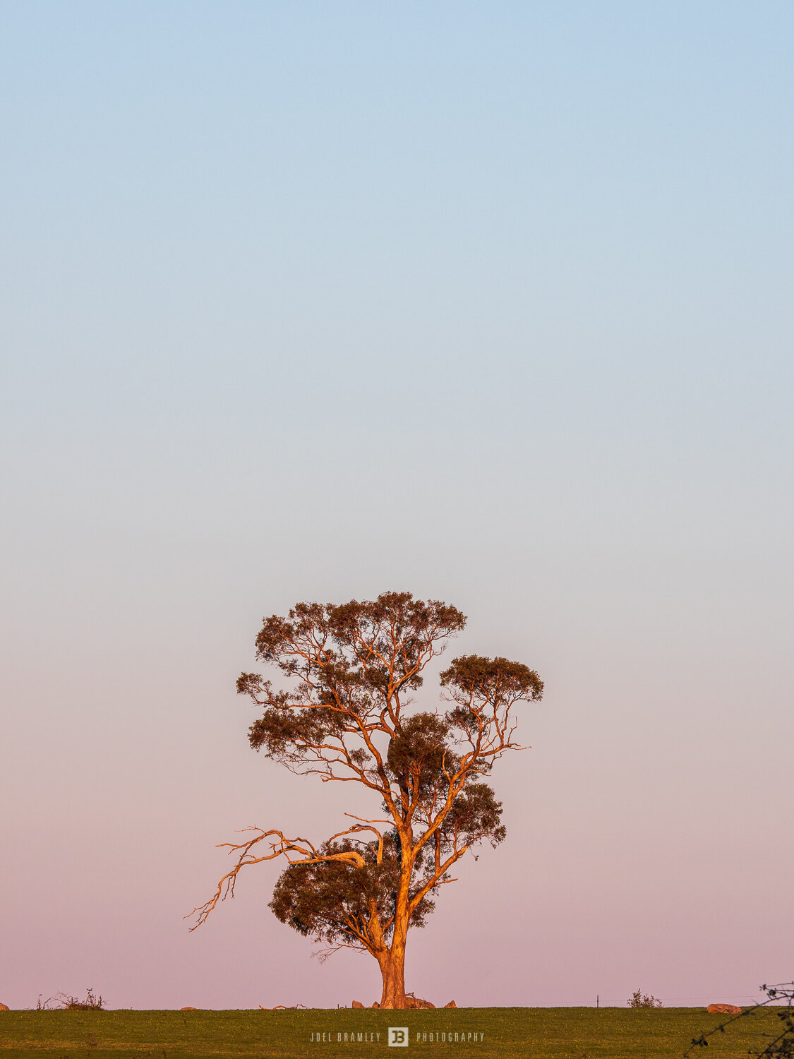 full-moonrise-tree-s-1.jpg