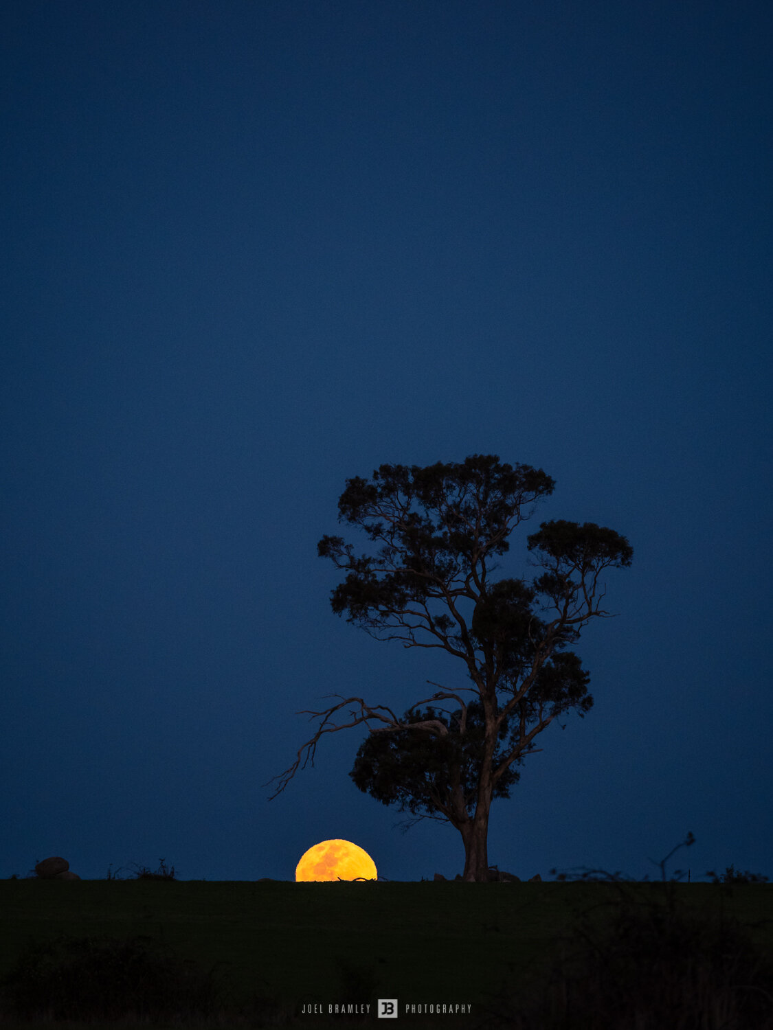 full-moonrise-tree-s-4.jpg