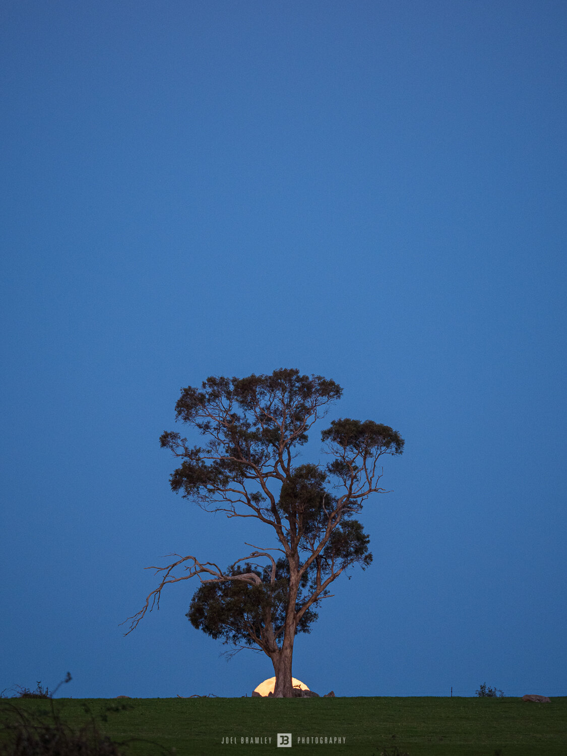 full-moonrise-tree-s-3.jpg