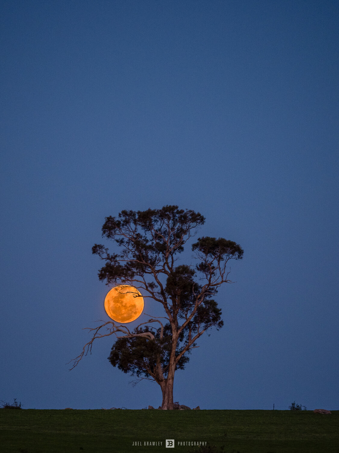 full-moonrise-tree-s-9.jpg