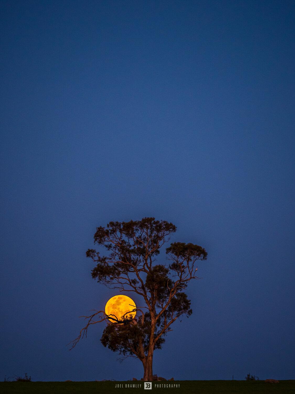 full-moon-rise-s.jpg
