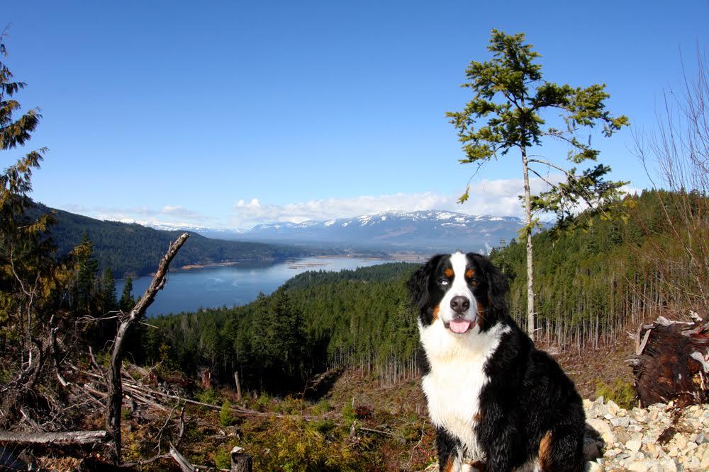 Alberni Inlet Trail by  Chris Fenton.