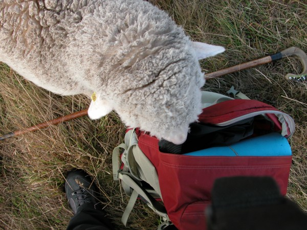 Georgie checking out my backpack while I was taking photos during a rest time in the grazing circuit.