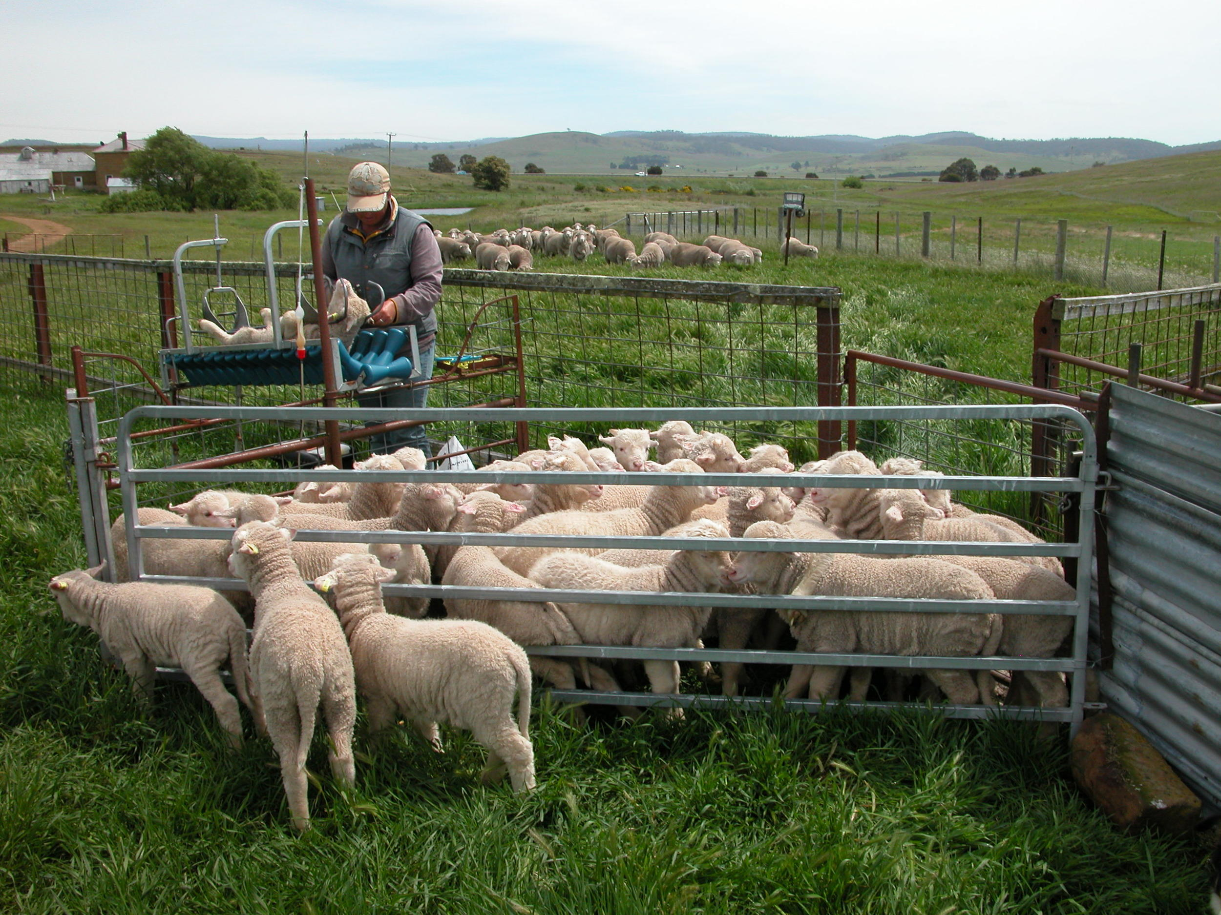 """The """"cradle"""" and lamb pen"""
