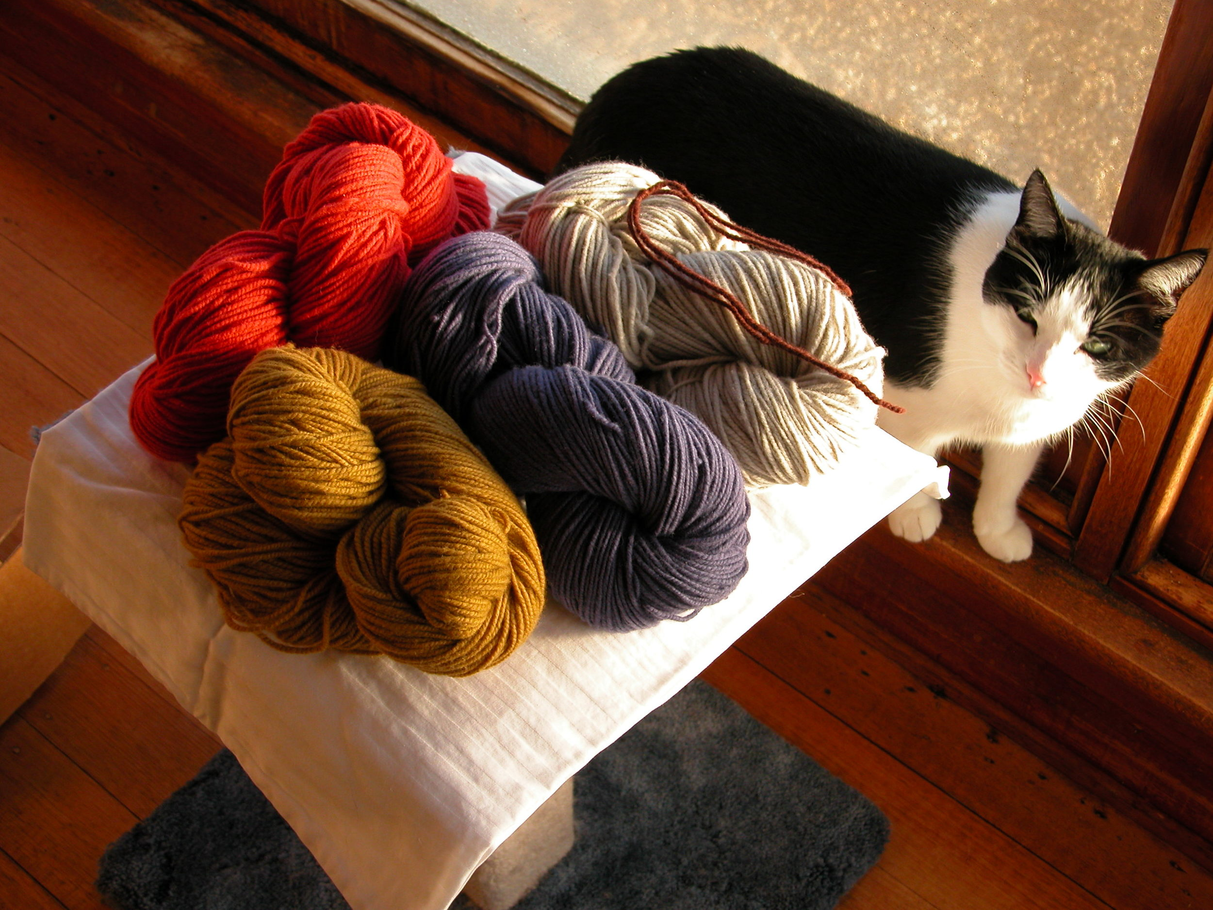 Skye kitty and the very first dye lot of yarn.