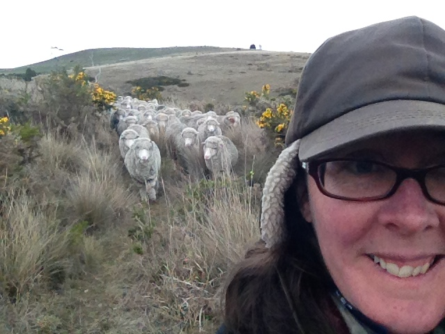 Lyn leading the flock down a narrow track through the gorse