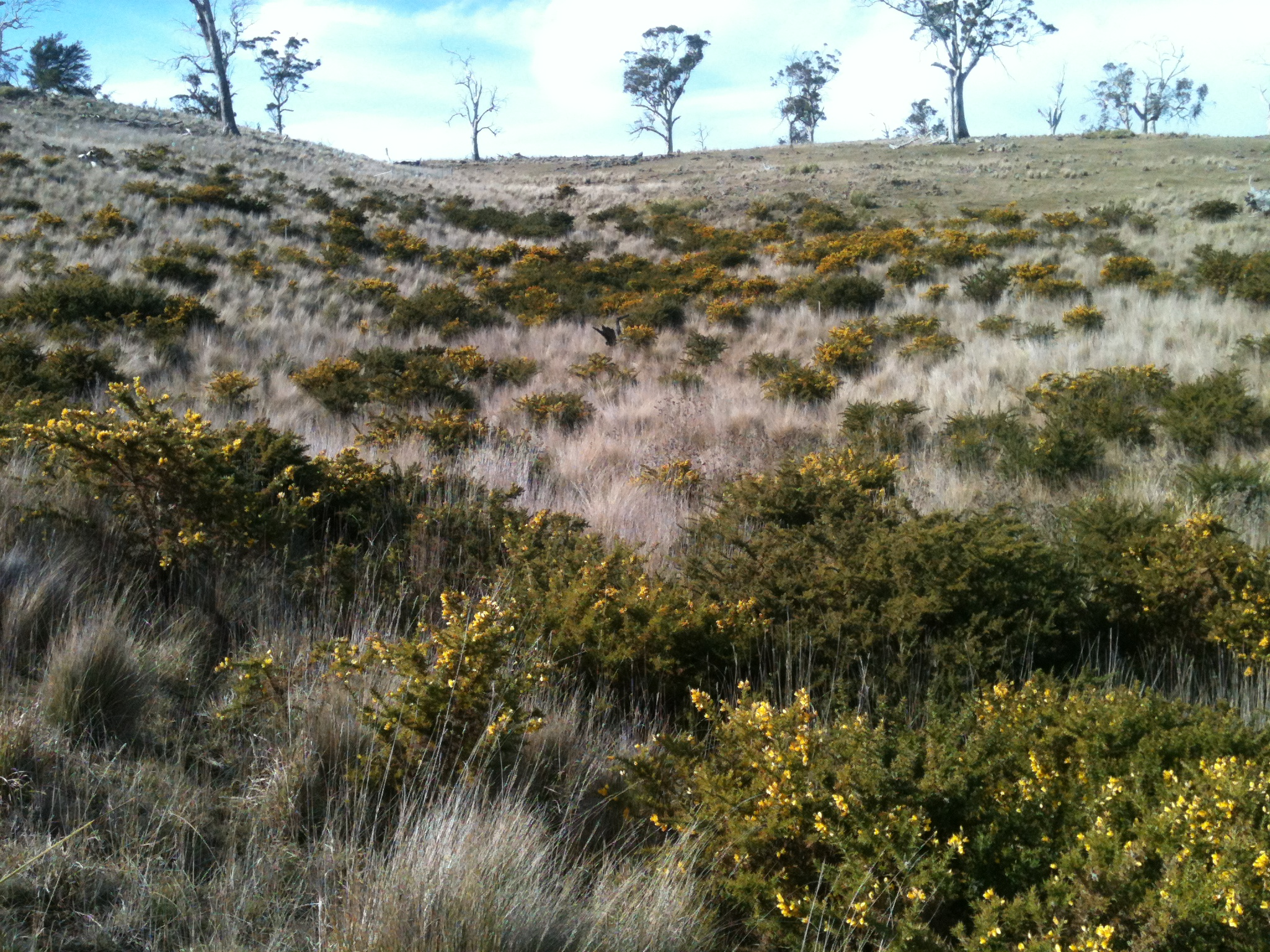 The view at sheep's eye level of the rank grass in the gully, just after the sheep passed through it in the previous two photos.