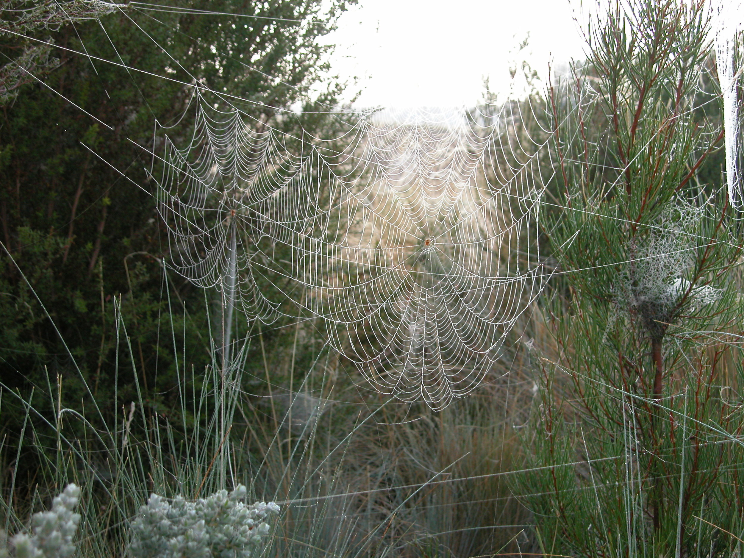 Dewy spider webs in the native garden around my house. This photo was taken in February 2013.