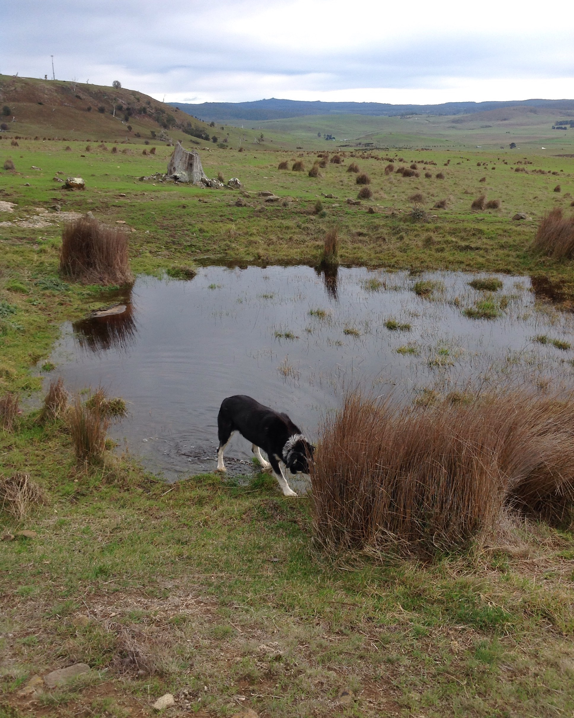 There hasn't been water in this little spring for months. It's lovely to see it fill up–if it keeps raining, it might even overflow!