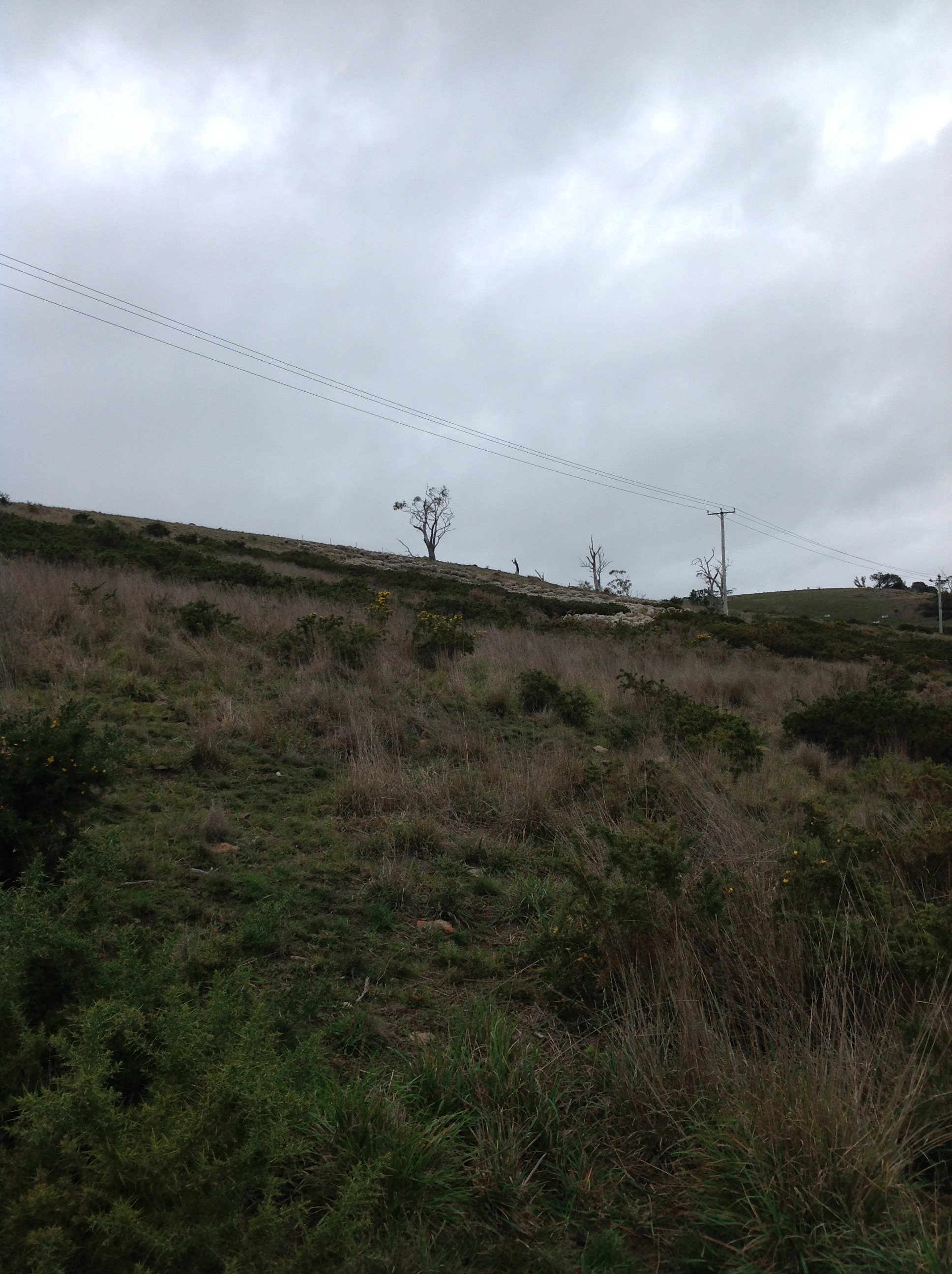 P4: Winding their way through the gorse and up the last hill.