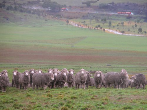 ...and a similar perspective as backdrop to some very soggy sheep on Monday.